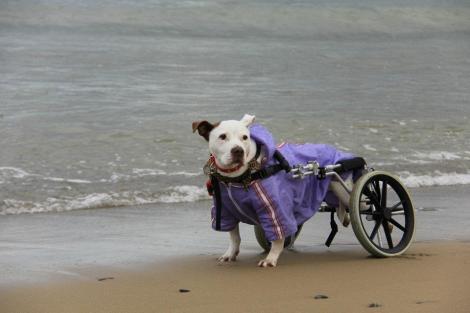 Rosita strikes a pose on her beloved Sandymount Strand